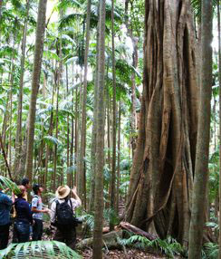 Bne club50 Groupinrainforest