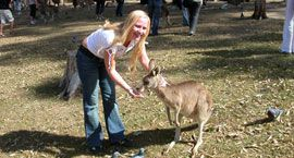 Lone Pine Koala Sanctuary (AUS$24 plus travel)